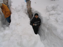 白樺の根元を1.5mくらい掘り下げて、樹液採取をします。